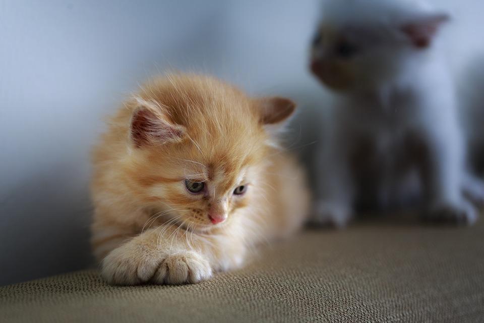 Наполнители для кошачьих туалетов как выбрать самый лучший