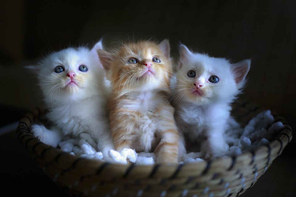 5 лучших переносок для кошек рейтинг 2020 топ 5