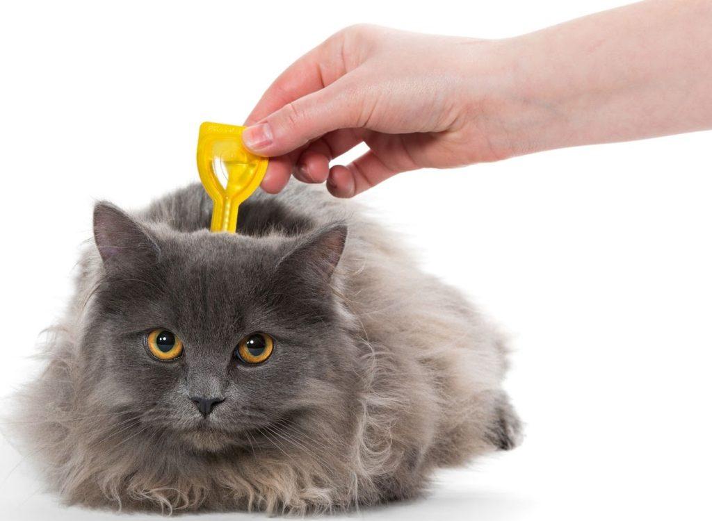 Какой препарат лучше дать от глистов у кошек