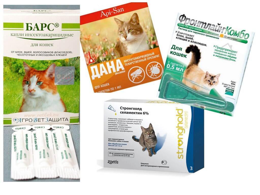 Какой препарат лучше дать от глистов у кошек thumbnail