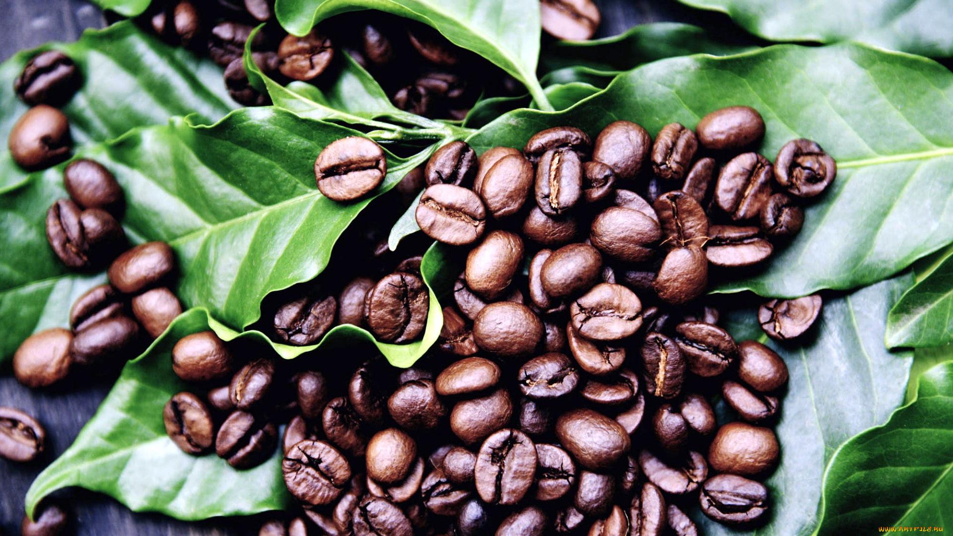 картинки с кофейными плантациями всем кто заглянул